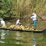Fracht mit Kokosnüssen-Familienbetrieb