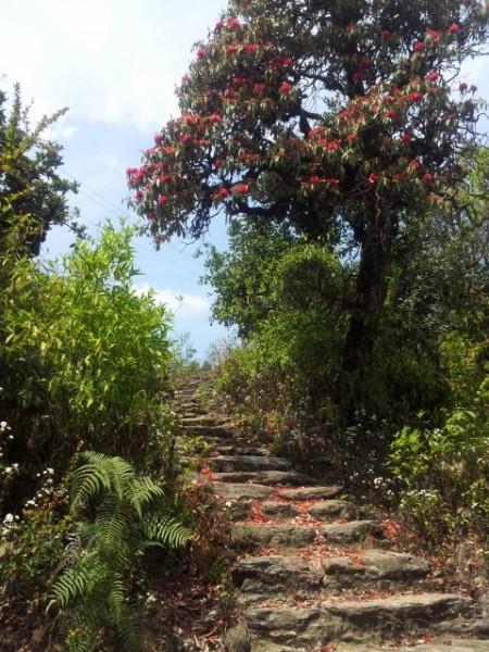 130423_Reisebericht-Nepal-05_html_75eb512f