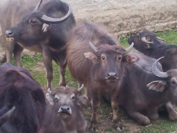 130423_Reisebericht-Nepal-05_html_m59f6bb19