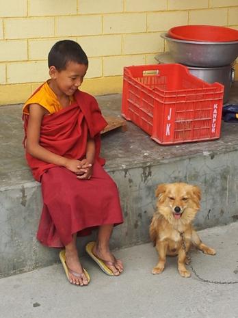 Hier der Klosterwachhund, den wir letztes Jahr als Baby erlebten - jetzt spuckt er große Töne.