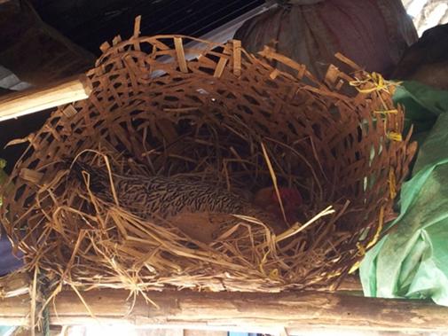 ... verweilt die brütende Henne über ihm auf ihren Eiern.