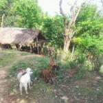 Tierstall am Nachbarhaus