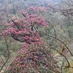 Blühende Wälder