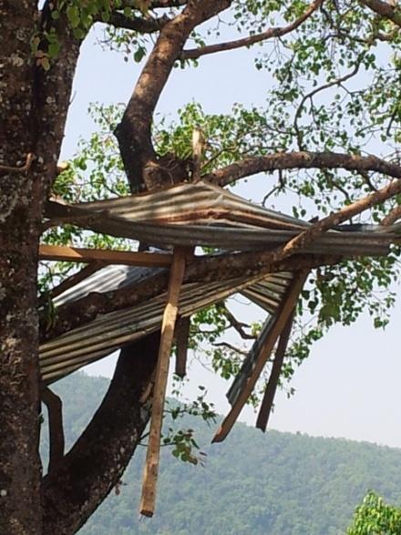 Blechdach im Baum