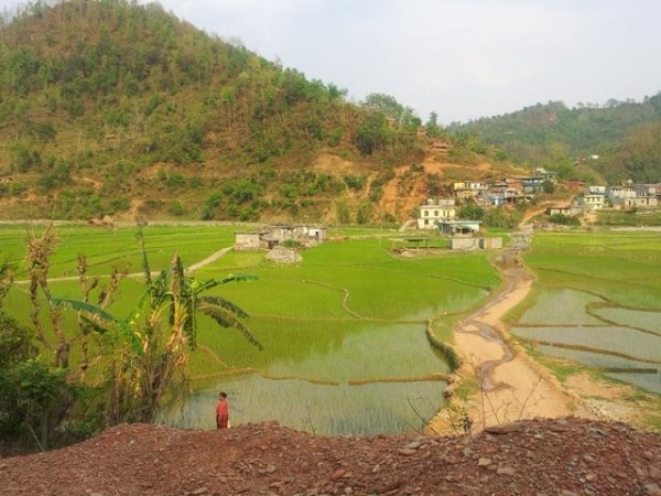 Reisfelder in Sankhe