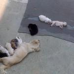 Unsere Hundemama mit ihren 8 Junghunden